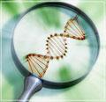 minyak kelapa dara bioteknologi proses